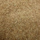 Kentucky Bluegrass Grass Seed, 5 Pound Bag