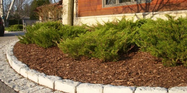 Pine Mulch at Mr. Mulch Landscape Supply